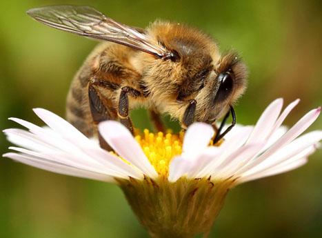 Конкурс рисунков «Мир медоносных пчёл»